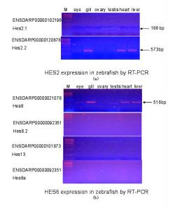 2Figure S4-Supp-expression - PLOS
