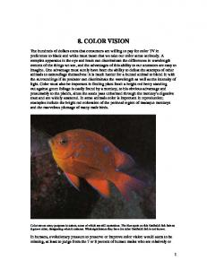 8. color vision - Eye, Brain, and Vision