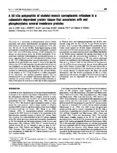 A 60 kDa polypeptide of skeletal-muscle sarcoplasmic ... - Europe PMC
