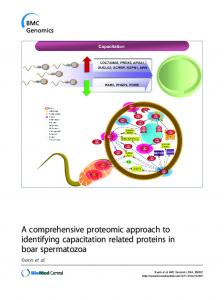 A comprehensive proteomic approach to identifying capacitation ...