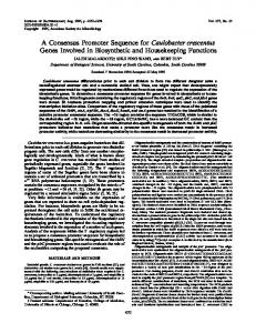 A Consensus Promoter Sequence for ... - Journal of Bacteriology