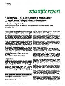 A conserved Toll-like receptor is required for Caenorhabditis ... - OHSU