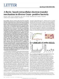 A flavin-based extracellular electron transfer