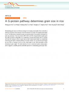 A G-protein pathway determines grain size in rice - Nature