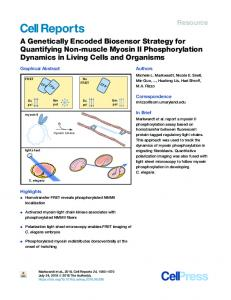 A Genetically Encoded Biosensor Strategy for Quantifying ... - Cell Press