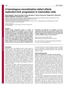 A homologous recombination defect affects replication-fork ...