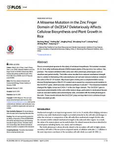 A Missense Mutation in the Zinc Finger Domain of
