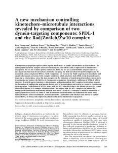 A new mechanism controlling kinetochore–microtubule interactions ...