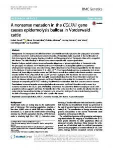 A nonsense mutation in the COL7A1 gene causes epidermolysis ...