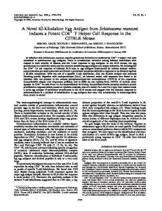 A Novel 62-Kilodalton Egg Antigen from Schistosoma mansoni ...