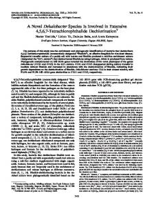A Novel Dehalobacter Species Is Involved in Extensive 4,5,6,7 ...