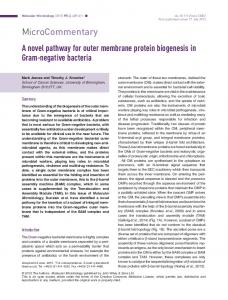 A novel pathway for outer membrane protein