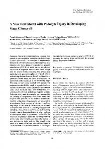 A Novel Rat Model with Podocyte Injury in Developing ...