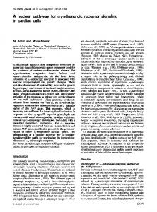 A nuclear pathway for oal-adrenergic receptor signaling ... - Europe PMC