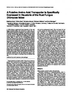 A Putative Amino Acid Transporter Is Specifically ...