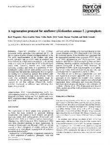 A regeneration protocol for sunflower - Springer Link