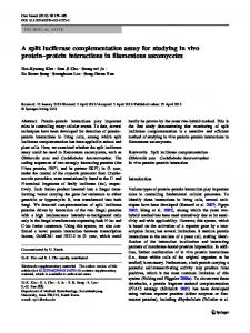 A split luciferase complementation assay for studying ... - Springer Link
