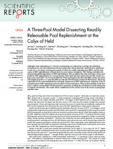 A Three-Pool Model Dissecting Readily