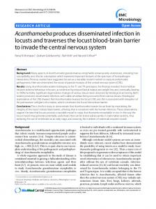 Acanthamoeba produces disseminated infection in locusts and ...