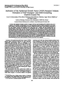 Activation of the Epidermal Growth Factor (EGF) - Molecular and ...