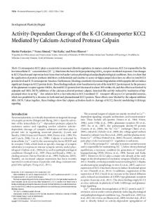Activity-Dependent Cleavage of the K-Cl ... - Semantic Scholar