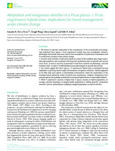 Adaptation and exogenous selection in a Picea ... - Wiley Online Library
