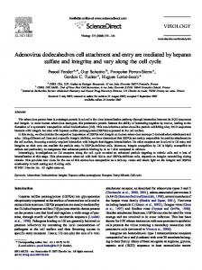 Adenovirus dodecahedron cell attachment and entry are ... - CORE