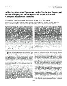 Adhering Junction Dynamics in the Testis Are Regulated by an ...