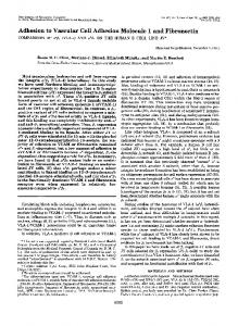 Adhesion to Vascular Cell Adhesion Molecule 1 and Fibronectin