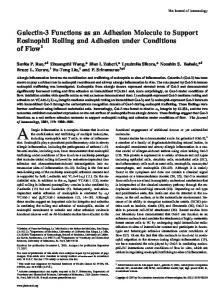 Adhesion under Conditions of Flow Molecule to Support Eosinophil ...