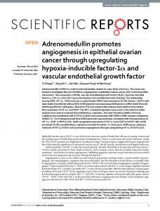 Adrenomedullin promotes angiogenesis in epithelial ovarian ... - Nature