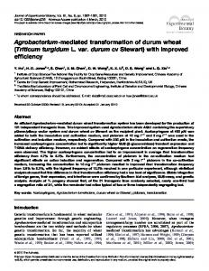 Agrobacterium-mediated transformation of durum wheat - CiteSeerX