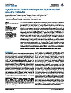 Agrobacterium tumefaciens responses to plant-derived ... - Frontiers