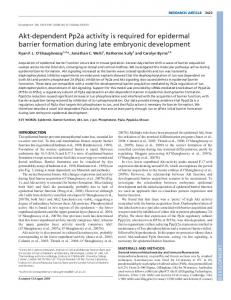Akt-dependent Pp2a activity is required for epidermal ... - Development