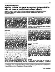amino acid transporter in skeletal-muscle cells and a