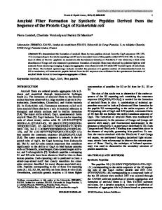 Amyloid Fiber Formation by Synthetic Peptides ...
