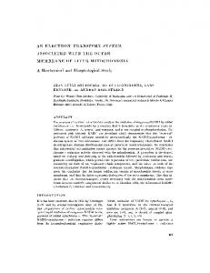 AN ELECTRON-TRANSPORT SYSTEM ... - BioMedSearch