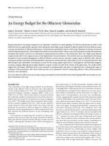 An Energy Budget for the Olfactory Glomerulus