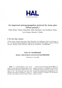 An improved micropropagation protocol for stone pine ...