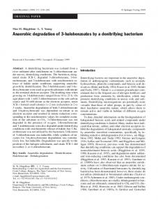 Anaerobic degradation of 3-halobenzoates by a denitrifying bacterium