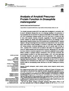 Analysis of Amyloid Precursor Protein Function in Drosophila ... - Core