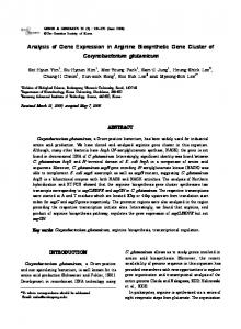 Analysis of Gene Expression in Arginine Biosynthetic ...