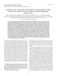 Analysis of the Association of the Human Cytomegalovirus DNA ...