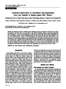 Anatomical Observations of Adventitious Bud ... - Springer Link