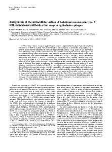 Antagonism of the intracellular action of ... - Wiley Online Library