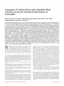 Antagonists of Calcium Fluxes and Calmodulin Block Activation of the ...