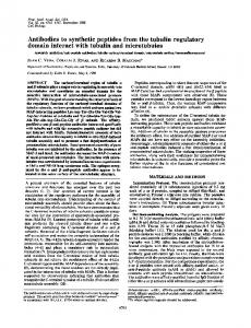 Antibodies to synthetic peptides from the tubulin regulatory domain ...