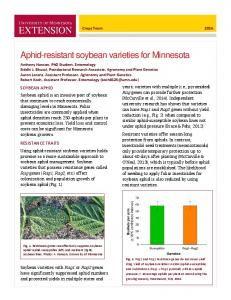 Aphid-resistant soybean varieties for Minnesota