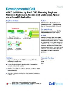 aPKC Inhibition by Par3 CR3 Flanking Regions Controls ... - Cell Press