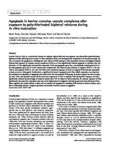Apoptosis in bovine cumulus–oocyte complexes after exposure to ...
